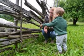 Roosa ja Eino Simolin ruokkivat Askalankoskella lampaita.
