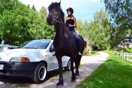 Vinhan Tilalla Ella Hjerp liikkui hevosen kanssa tavallisen henkilöauton viereen näytääkseen, miten valtava hevonen on autoon nähden. Hjerpin ratsu Lotte painaa noin 600 kiloa; naarashirvi painaa yleensä enintään 350 kiloa, uroshirvi 600 kiloa.