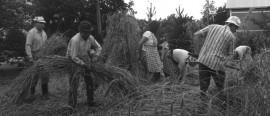 Matti Haapasen pellolla elokuussa 1990. Tunnistatko kuvassa näkyviä henkilöitä?