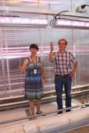 MTT Piikkiön erikoistutkijat Liisa Särkkä ja Kari Jokinen esittelevät led-valoja tutkimuskasvihuoneessa, josta kurkkusato on jo korjattu.