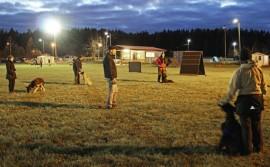 Marko Henttinen toimii yhtenä kouluttajana viikottain pidettävissä harjoituksissa, joissa yllä pidetään ja harjoitellaan niin tottelevaisuutta kuin haku- ja jälkityöskentelyäkin.