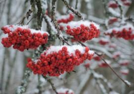 Myös Paimiossa saatiin torstaina lunta.